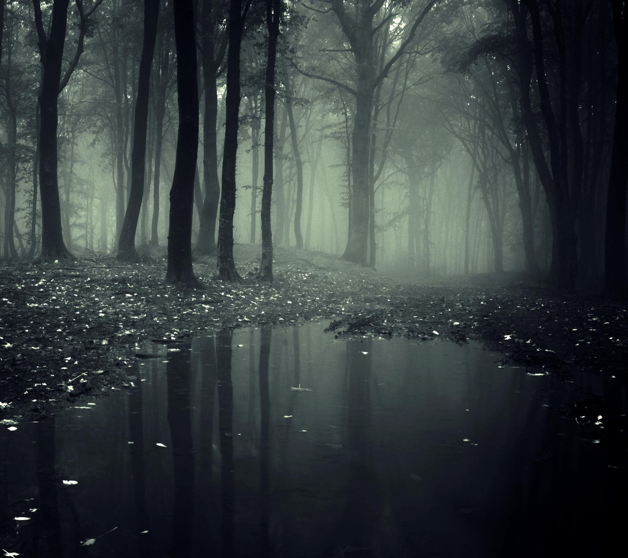 2160×1920 wallpaper: Creepy Forest