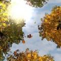 Falling Leaves Free Wallpaper