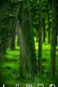 RealDepth Forest Free Live Wallpaper