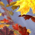 Autumn Tree Free Live Wallpaper