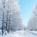 Snowfall Live Free Wallpaper