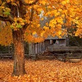 Autumn Live Wallpaper-apk