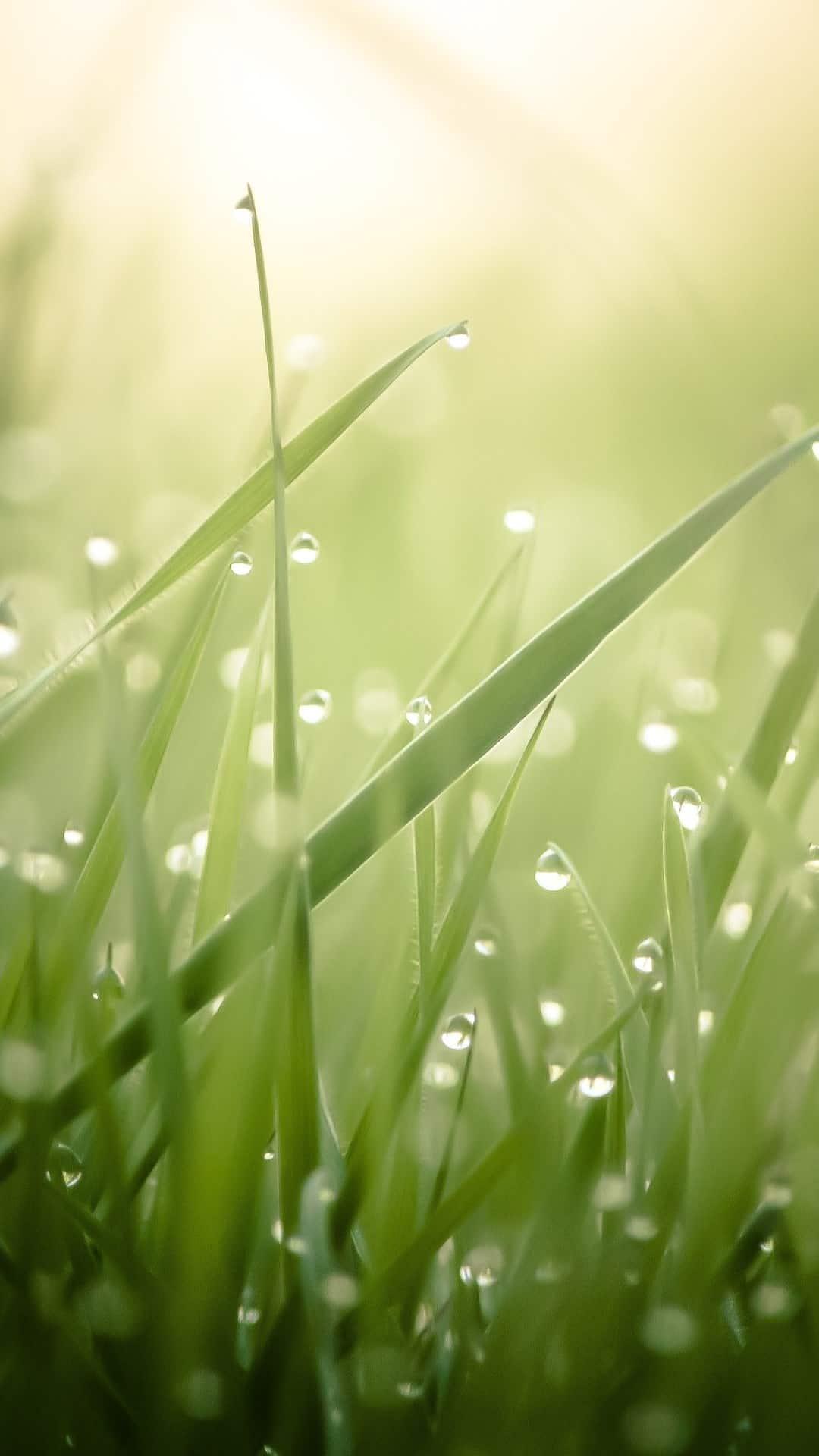grass live wallpaper apk