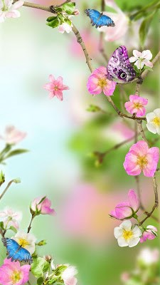 Flowers Live Wallpaper-1