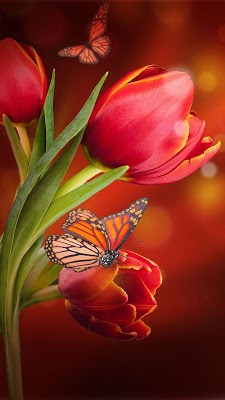 Flowers Live Wallpaper-2