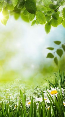 Green Spring Live Wallpaper-2