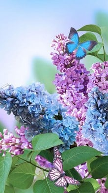 Spring Flowers Live Wallpaper-2