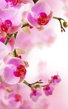 Orchid Live Wallpaper-1