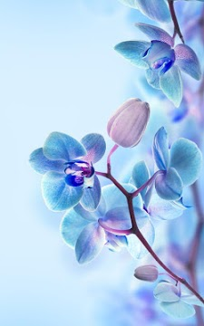 Orchid Live Wallpaper-2