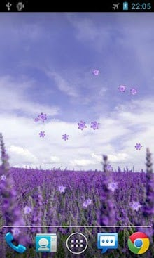 Lavender Live Wallpaper-1