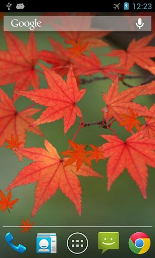 Maple Leaf Live Wallpaper