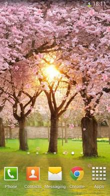 Sakura Live Wallpaper-1