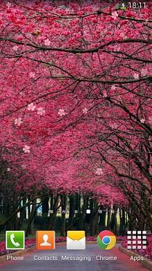 Sakura Live Wallpaper-2