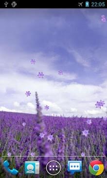 Lavender Live Wallpaper-2