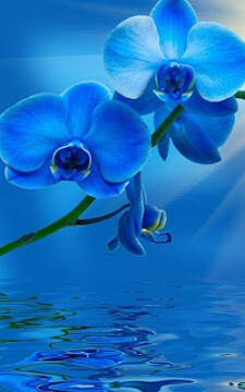 Mavi Canlı Duvar Kağıdı-2